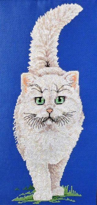 Particolare fuori porta gatto bianco