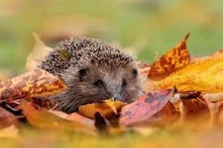 Animale in autunno