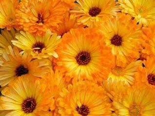 fiori stupendi