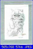 Gatti e Gattini - schemi e link-gatto%2520bianco_-jpg