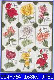 Rose, Roses, Rosas, Rosen - schemi e link-rose-1-foto-jpg