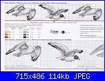 Mare - schemi e link-gabbiani2-jpg