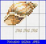 Mare - schemi e link-conchiglia-jpg