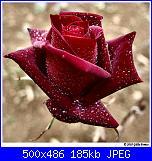 PER TUTTE LE MAMME...-66824899_fba2a63bb0-jpg