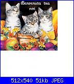 ade si presenta-3-gattini-fiori-bv-tra-noi-jpg