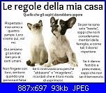 quadretto x un'amica animalista-551320_607321799281622_1704812545_n-jpg
