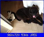Schema cane e gatto da creare da una foto-309285_4589430219792_1658727040_n-jpg