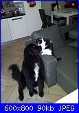 Schema cane e gatto da creare da una foto-image-jpg