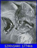 gatto con farfalla-gatto-con-la-farfalla-jpg