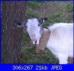 Trasformare foto in schema-fb_img_1479336572540_1-jpg