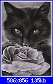 gatto con rosa-kitten_and_the_rose-134kb-jpg