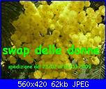 SWAP DELLE DONNE-mimosamvc335fis0-jpg