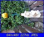 """Foto sal """"un fiore per te: Il tulipano""""-sal-tulipani-jpg"""