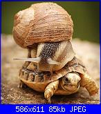 2° Very Fast Contest-lumaca_tartaruga-jpg