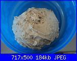 Pane al girasole-15-12-14-026-jpg