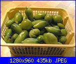 Pomodori verdi in agro-dolce x l'inverno-04102010-jpg