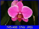 """Sal amigurumi """"Orchidea""""-manutenzione-e-cura-delle-orchidee_ng1-jpg"""