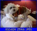 Moda a maglia per i nostri amici pelosi-pic_0515-jpg