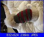 Moda a maglia per i nostri amici pelosi-pic_0514-jpg