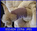 Moda a maglia per i nostri amici pelosi-pic_0513-jpg