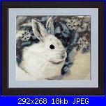 Coniglio / conigli/ coniglietto / coniglietti-coniglio-2-jpg