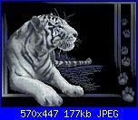 Animali esotici/selvatici-277-jpg