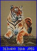 Animali esotici/selvatici-tigr_pic-jpg