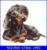 Cani-bassotto-jpg