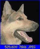 Cani-noble-poodle-222-l-free-design-jpg