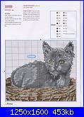 Gatti e Gattini-cat-11-jpg