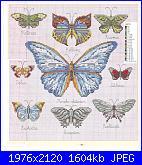 Farfalle-2-jpg