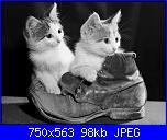 Gatti e Gattini-gatt-jpg