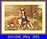 Cavallo / Cavalli-211191-5bbba-77890427-u5894a-jpg