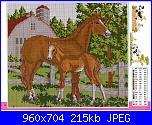 Cavallo / Cavalli-cavalli1-jpg