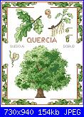 Alberi e Foglie-alberi-1-foto-jpg