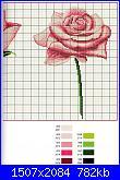 Rose-img086-jpg