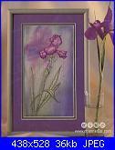 Iris-irises-1-jpg