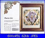 Iris-paarse-iris-1-jpg