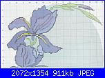 Iris-ovale-jpg