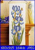 Iris-iris-1-jpg