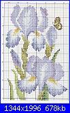 Iris-iris-1-1-jpg