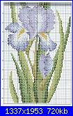 Iris-iris-1-2-jpg