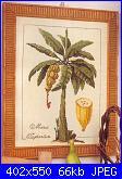 Frutta-banane-foto-jpg