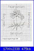 Agneta Engman - Aromatherapy Collection-geranio-2-jpg