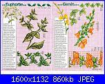 Tavole di fiori-42_77-jpg