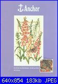 Fiori-pce936-flowering-foxgloves-anchor-jpg