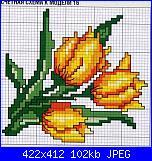 Tulipani-tulipani-jpg