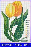 Tulipani-tulipani-3-jpg