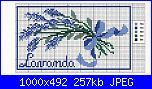 lavanda-410698-3d768-85156840-ube627-jpg