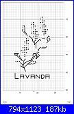 lavanda-211191-fde1b-96848066-ubf635-jpg
